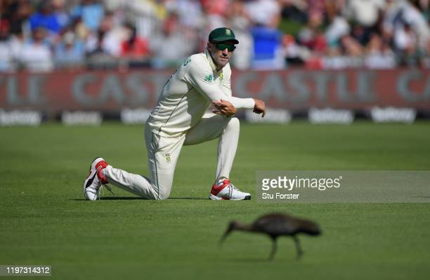 Hadada bird pecks away on the outfield as Faf du Plessis looks on during Day One of the Second Test between England and South Africa on January 03...