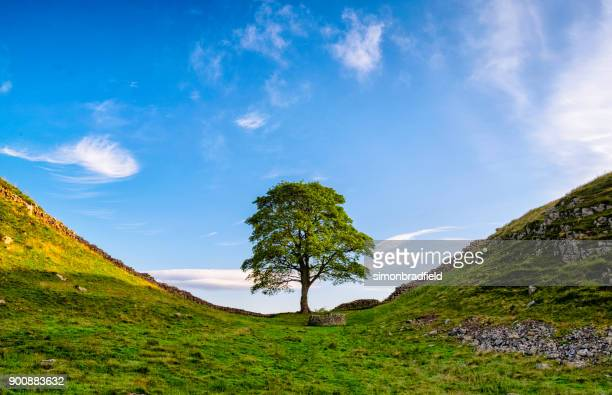 Hadrian's Wall And Sycamore Gap