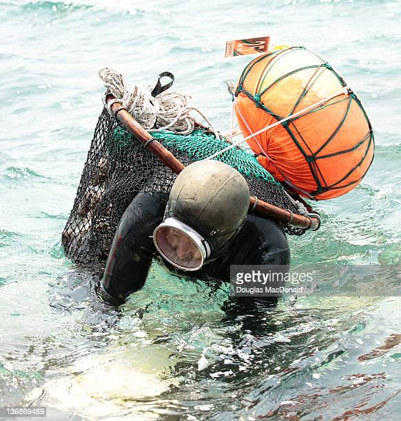 A Haenyeo struggles with a heavy load of shellfish as she leaves the water during a diving competition on Jeju Island South Korea