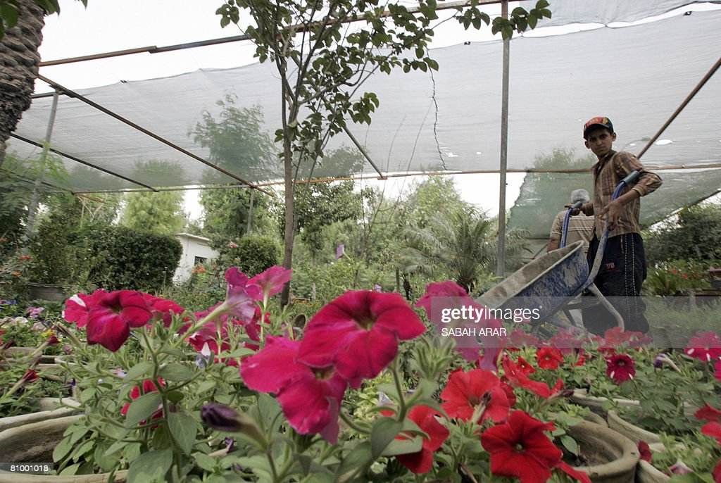 Haidar A Worker At The Al Elwiyah Nursery Pushes His Wheel Barrow On May 06