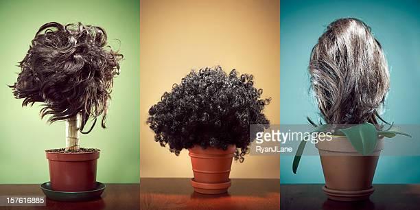 Hair Trans - Plant