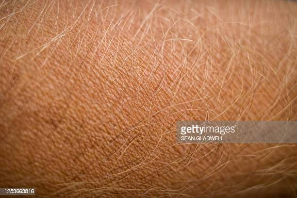 hairs on arm - goose bumps stock pictures, royalty-free photos & images