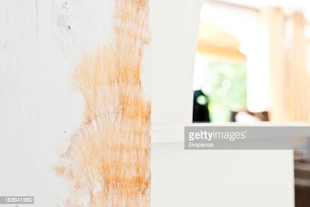 Peludo y la mascota Filiform moldes de yeso húmedo de pared