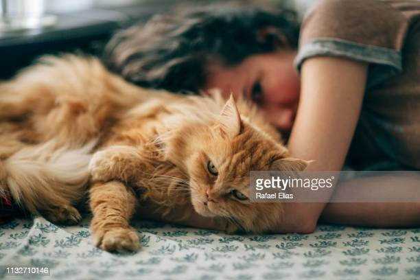 hairy cat and young woman resting on sofa at home - persian cat stock pictures, royalty-free photos & images