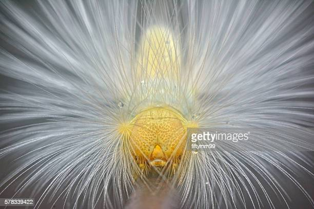 hairy caterpillar - hairy asian stock pictures, royalty-free photos & images