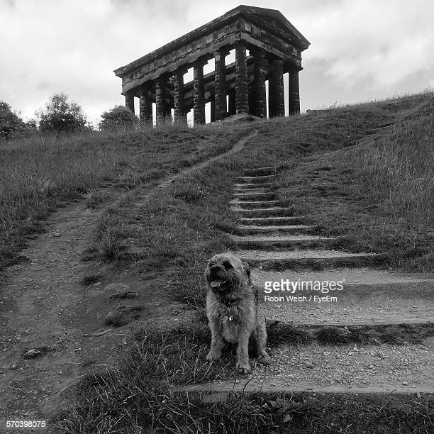 Hairy Dog Sitting On Steps Against Old Ruins