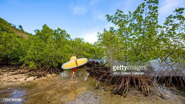 haiti, coastline on the atlantic ocean - paisajes de haiti fotografías e imágenes de stock