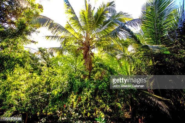 haiti, morning on the atlantic ocean - paisajes de haiti fotografías e imágenes de stock