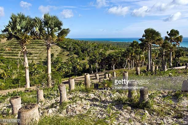 haití, sud-est provincia, deforestación. - paisajes de haiti fotografías e imágenes de stock