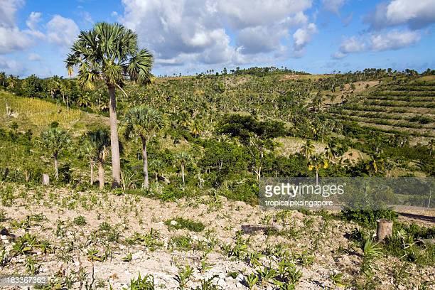 haití, sud-est provincia, deforestación - paisajes de haiti fotografías e imágenes de stock