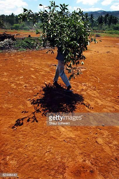 haiti's use of wood for energy leaves forests devastated - paisajes de haiti fotografías e imágenes de stock