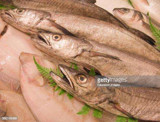 Hake for sale on fish shop counter