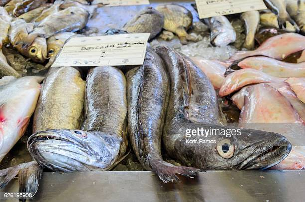 hake. fresh fish, low fat, white hake fillets are usually grilled and served in a light meal, but they also look good when fried or baked. - merluza fotografías e imágenes de stock