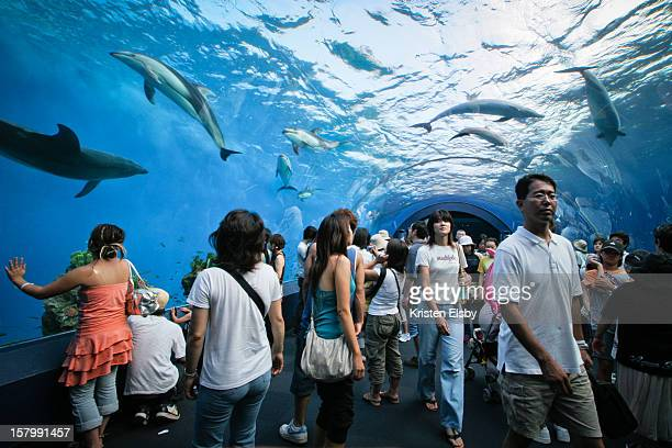 Hakkeijima Sea Paradise has a giant dolphin tank with an tunnel through the middle that visitors can walk through watching the majestic whitebellied...