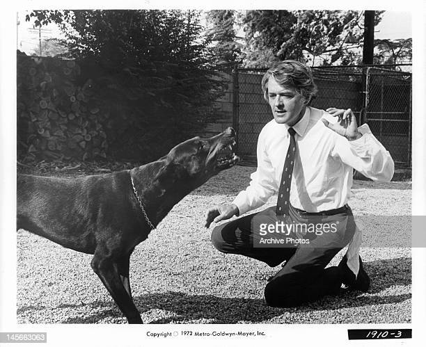 Hal Holbrook with growling dog in a scene from the film 'They Only Kill Their Masters' 1972