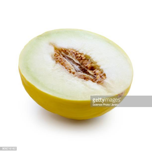 honeydew melon ストックフォトと画像 getty images