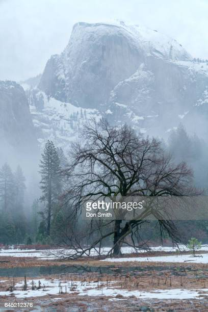 half dome and elm - don smith stock pictures, royalty-free photos & images