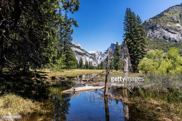 half dome and merced river in yosemite national park - yosemite valley stock photos and pictures