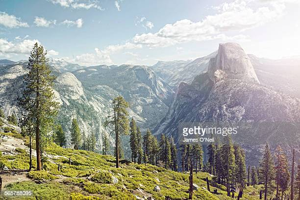 half dome in yosemite with foreground trees - nature stock pictures, royalty-free photos & images
