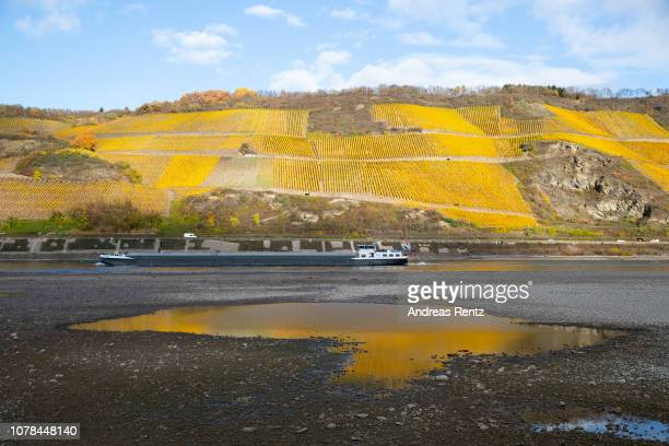 Half loaded cargo ships pass by the low water in the River Rhine along the vineyards on November 13 2018 in Osterspai near Sankt Goarshausen Germany...
