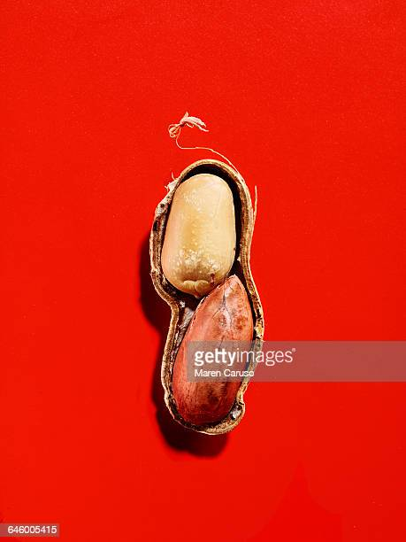 half of a whole peanut on red background - peanuts stockfoto's en -beelden
