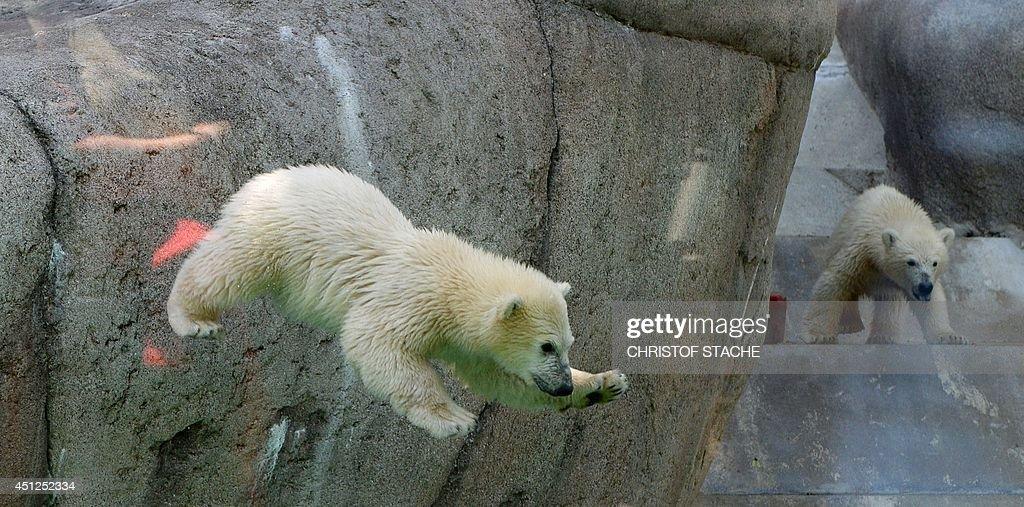 GERMANY-ANIMALS-POLAR BEAR : News Photo