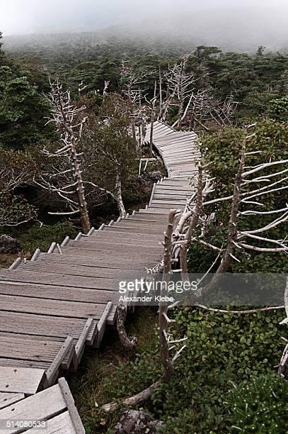 hallasan mountain hiking path - hallasan stock photos and pictures