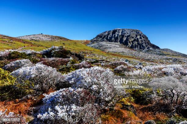 hallasan mountain (unesco world heritage) in winter in jeju island - hallasan stock photos and pictures