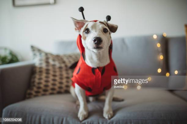 halloween dog - happy halloween stock photos and pictures