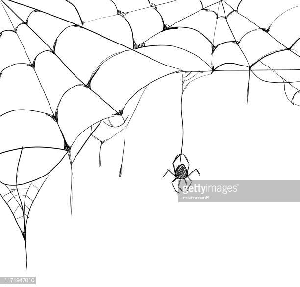 halloween illustration of spider web - ragnatela foto e immagini stock
