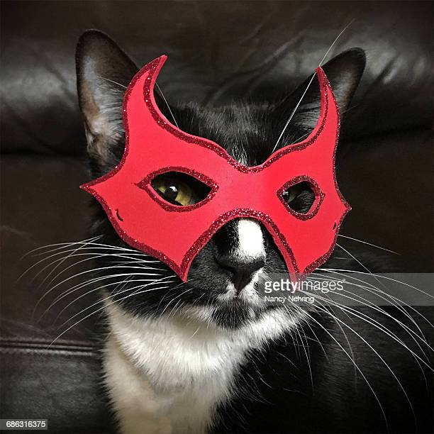 halloween pets - cat costume stock photos and pictures