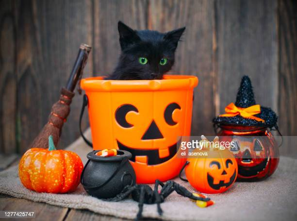 halloween pumpkin and black cat on wooden background - halloween cats stock pictures, royalty-free photos & images