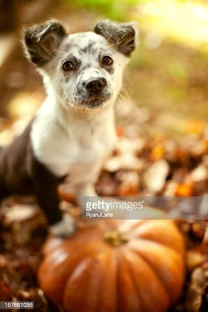 abóbora de halloween cachorrinho e folhas de outono - halloween pumpkin - fotografias e filmes do acervo