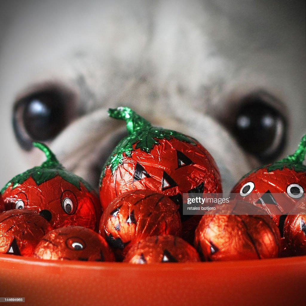 Halloween pumpkins : Stock Photo