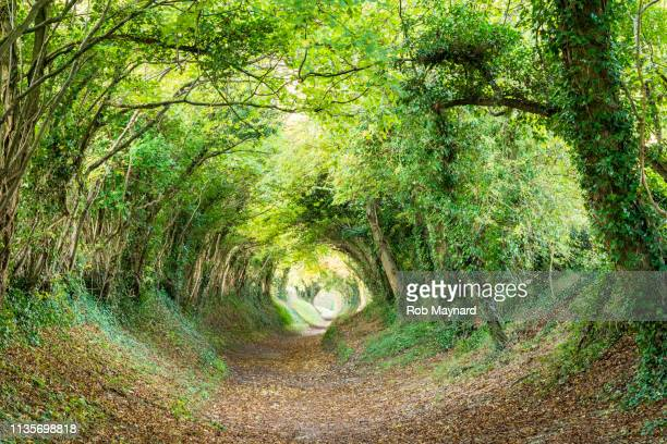 halnaker tunnel in south downs - woodland stock pictures, royalty-free photos & images