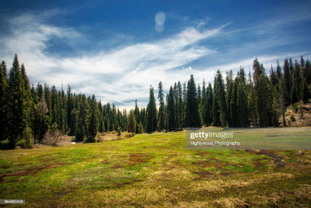 Halstead Meadow in Spring : Foto stock