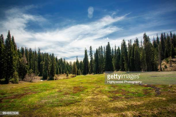 halstead meadow in spring - woodland stock pictures, royalty-free photos & images