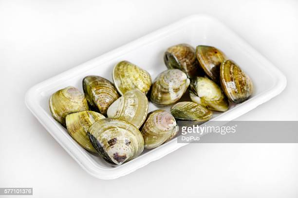 'Hamaguri' clams in plastic tray on white background