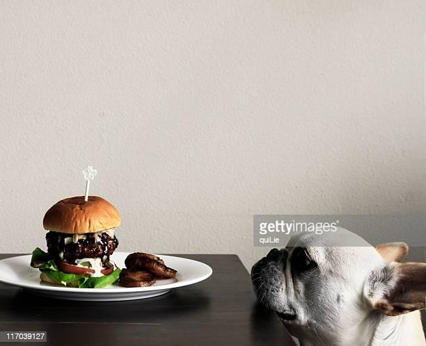 Hamburger and dog