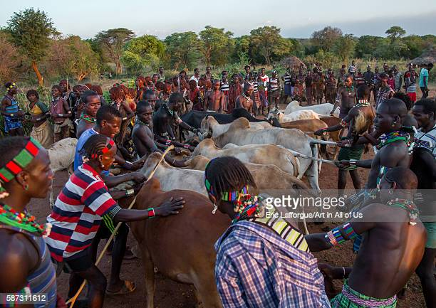 Hamer tribe men lining up the cows for bull jumping ceremony omo valley turmi Ethiopia on March 12 2016 in Turmi Ethiopia