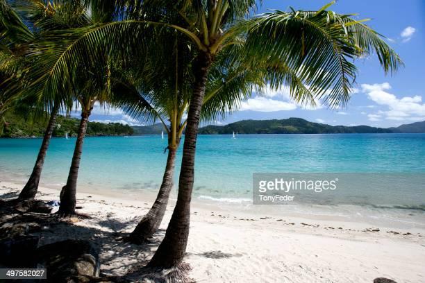 île d'hamilton, queensland, australie - île d'hamilton photos et images de collection