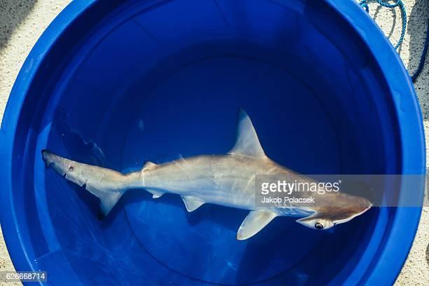 Hammerhead shark in a blue bucket
