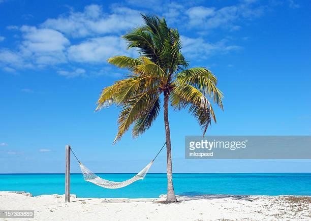 Hammock at the Beach in Bahamas with Palm Tree