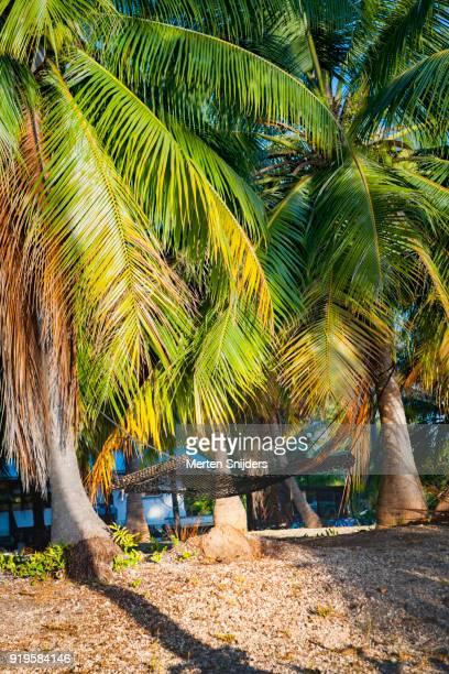 Hammock between large palmtrees on beach
