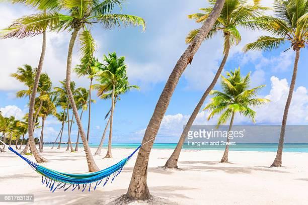 Hammock between palm trees on beach, Dominican Republic, The Caribbean