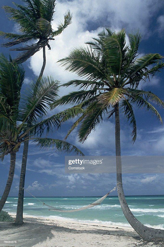Hammock between palm trees : Stockfoto