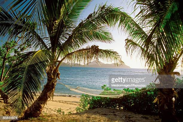 Hammock between two palm trees, Mamanuca Group Resort Beach, Tokoriki Island, Fiji
