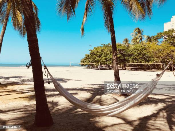 hammock hangin on palm trees on a beach and blue clear sky - colombia stock pictures, royalty-free photos & images