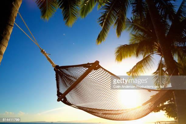 Hammock hanging between palm trees on tropical beach