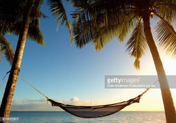 Hammock hanging between palm trees on tropical beach
